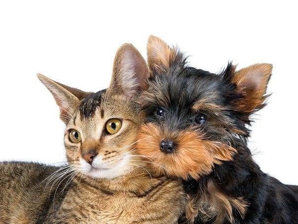 По уходу за домашними животными