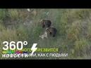 Трогательная дружба собаки и медведей