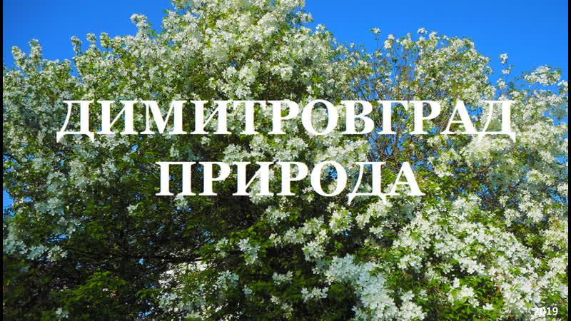 ДИМИТРОВГРАД - весна 2019 (D Roussos-бегут года)