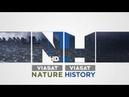 Могилы викингов - промо передачи на Viasat History HD