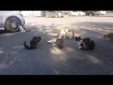 Не мешайте котёнку кушать!