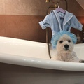 Hugo Boski on Instagram Happy International Bath Day!