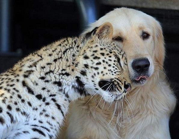 Дружба...