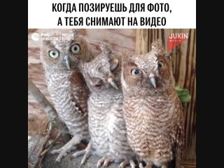 Нелегко быть совами