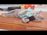 Aaron's Animals New Best Funny Video Compilation 2017 - Funny Cat