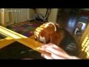 Равнозначный обмен по собачьи