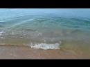 Дельфин ловит рыбку Крым Керчь . Удивительно просто
