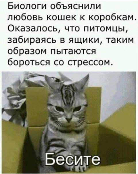 Картинка кота бесите