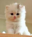 Если ты открываешь дверь коту, но он не хочет выходить, значит он впускает в дом кого-то еще.