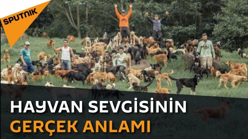Hayvan sevgisinin gerçek anlamı