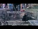 Мэтт Деймон,Сия,Х.Феникс и др. к миру о помощи.mp4