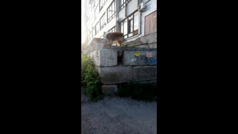 ещё прыжок