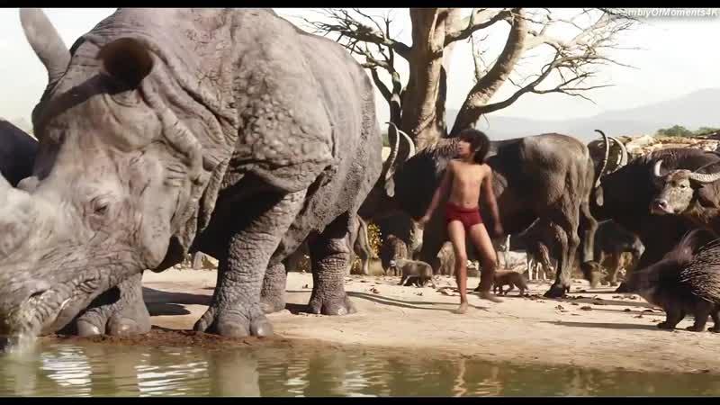Первая встреча Шерхан и Маугли. Книга джунглей 720p