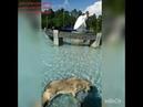 ВолкВоланд купается в фонтане ДИПЛОМ КУРСОВАЯ т v w 79127939429 id420983559