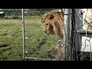 Эмоции животных, которые вышли на свободу из цирка (720p).mp4