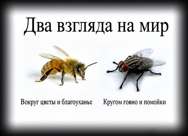 http://cs405226.userapi.com/v405226796/5921/VI32pF9xpn4.jpg