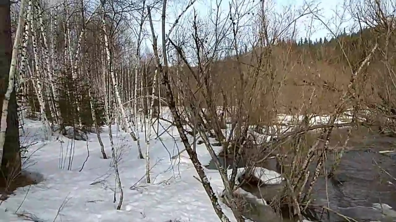 Охота на Медведя с Западносибирской Лайкой ФИЛЬМ ч 3