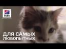 Hill's™ Science Plan™ для котят