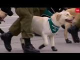 Чилийский полицейский парад