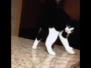 Кот косит под Майкла Джексона (6 sec)