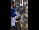 Обезьянки сафари парк геленджик