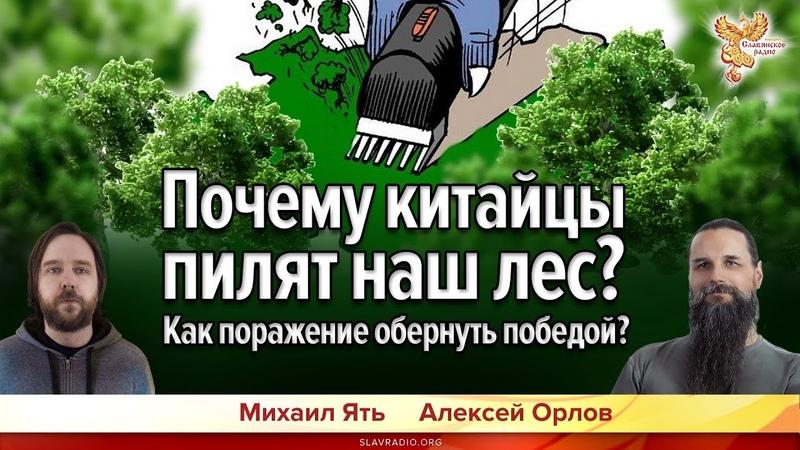 Почему китайцы пилят наш лес? Как поражение обернуть победой? Алексей Орлов и Михаил Ять