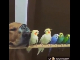 Попугаи, хомяк и собака