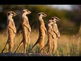 Documentaire animaux La Jungle   Animal Planet Channel 2015