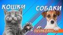 Приколы с Котами и Собаками5 Смешные коты и кошки 2018 ТЕСТ НА ПСИХИКУ, ПРОБУЙ НЕ СМЕЯТЬСЯ!