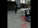 Utegenov_nurlan_1981_32858623_1433817020063342_283896410552664064_n.mp4