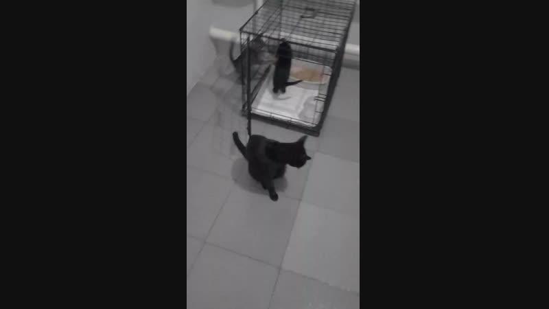 Котята с мамой в вет.клинике