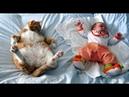 Babies and Cat are Best Friend   Коты и дети, лучшие друзья?! P.2