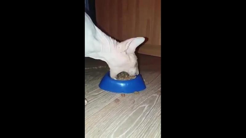 Голодный 🐈 кот