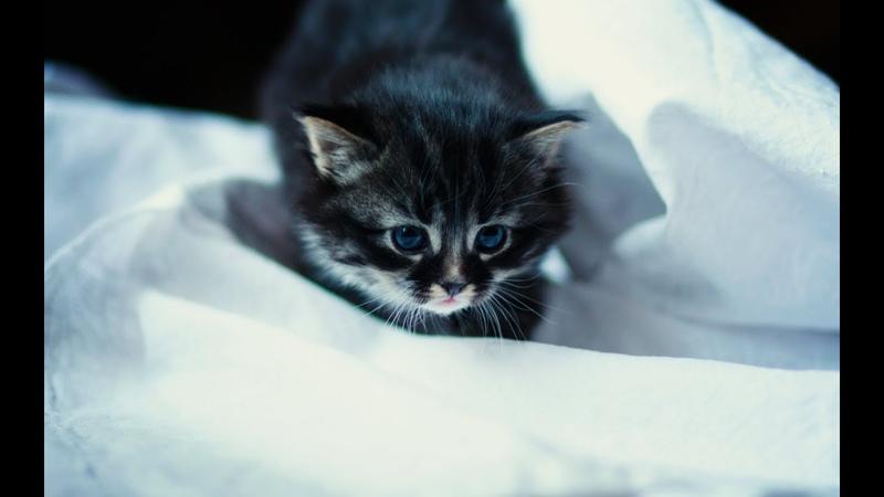 Милые котики и самые смешные котята )