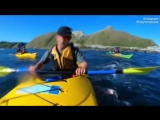 Seal slaps a kayaker in the face with an octopus