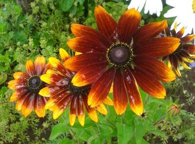 Цветы у Ликки SmcWxY26ji0