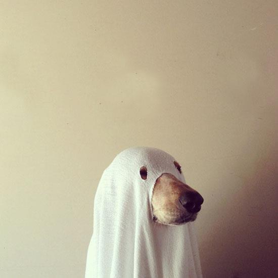Костюм на Хэллоуин для пса