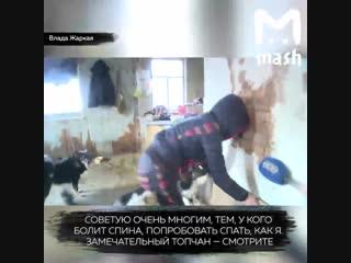 Танцовщица из Уфы продала квартиру, чтобы прокормить 56 собак