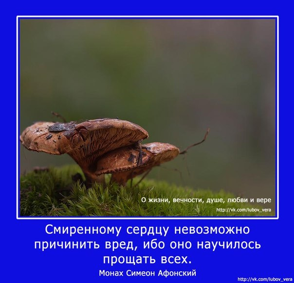 http://cs405425.userapi.com/v405425995/1dbe/cGRfeEwNzEk.jpg