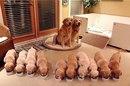 10 собак, которые гордятся своим чудесным потомством
