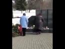 Ни стыда, ни совести: Две женщины забирают игрушки с мемориала в память о погибших в Кемерово.