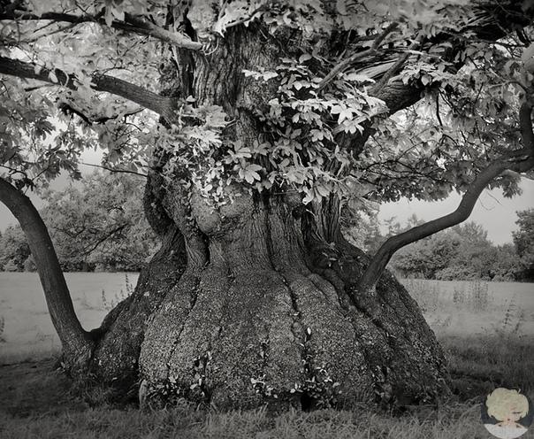 Фотограф 14 лет снимала старейшие деревья в мире