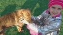Гуляю с собакой Таффи Кормим щенков ВЛОГ LizaTube