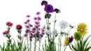 Про цветы для детей.Развивающие мультики для самых маленьких