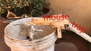 Best Mouse Trap Mouse trap saving 7 mouse in 10 minute I Have Ever Tested Mouse Trap In Action