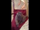 Кошка-шар еще активна)