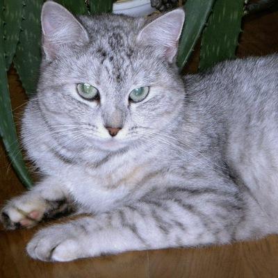 Юлия Жеглова, 12 сентября 1998, Владимир, id171221639