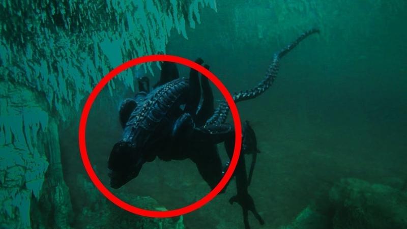 Когда они увидели этого подводного Монстра рядом с собой, СТРАХ поразил исследователей.