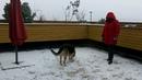 Джесси играет в снег на террасе
