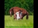«Только мы с конём по полю идём, Мы идём с конём по полю вдвоём»...